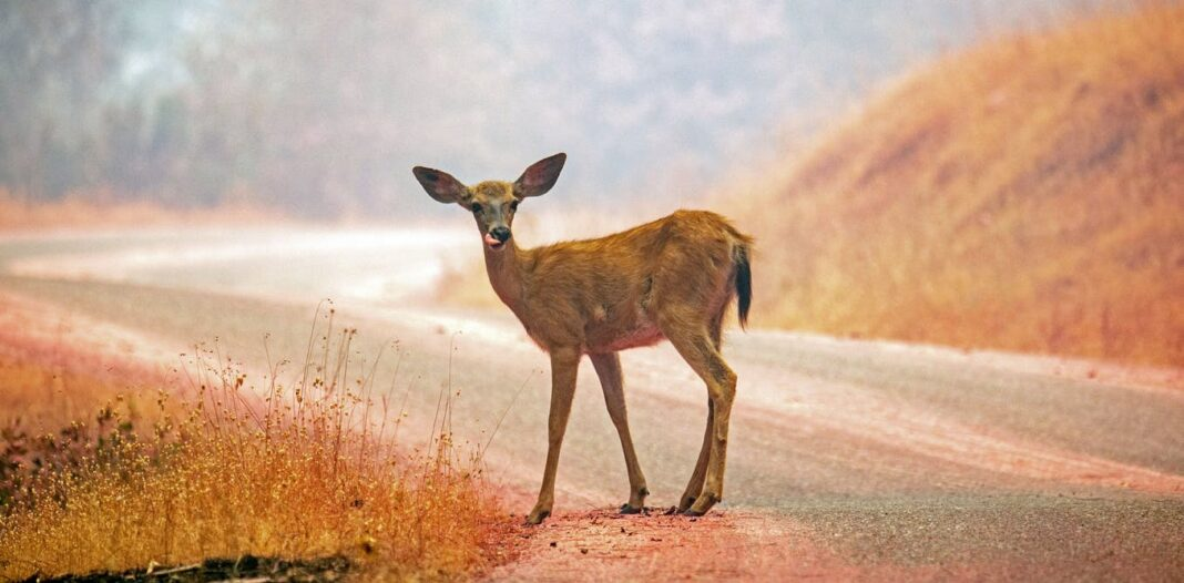 Falling means more deer on the road: 4 ways the day, month and year increases the risk of accidents