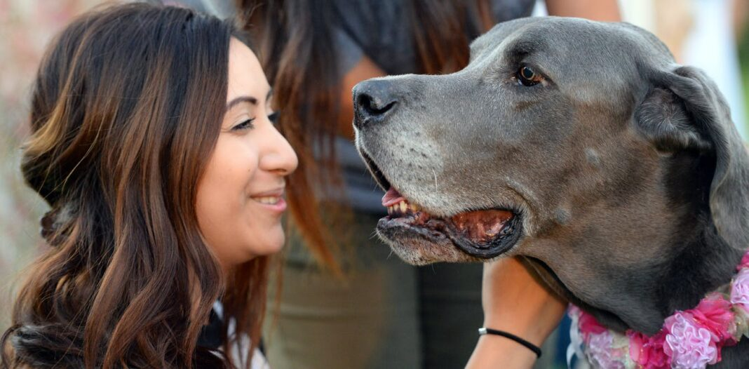 Therapy dogs help students cope with the stress of college life