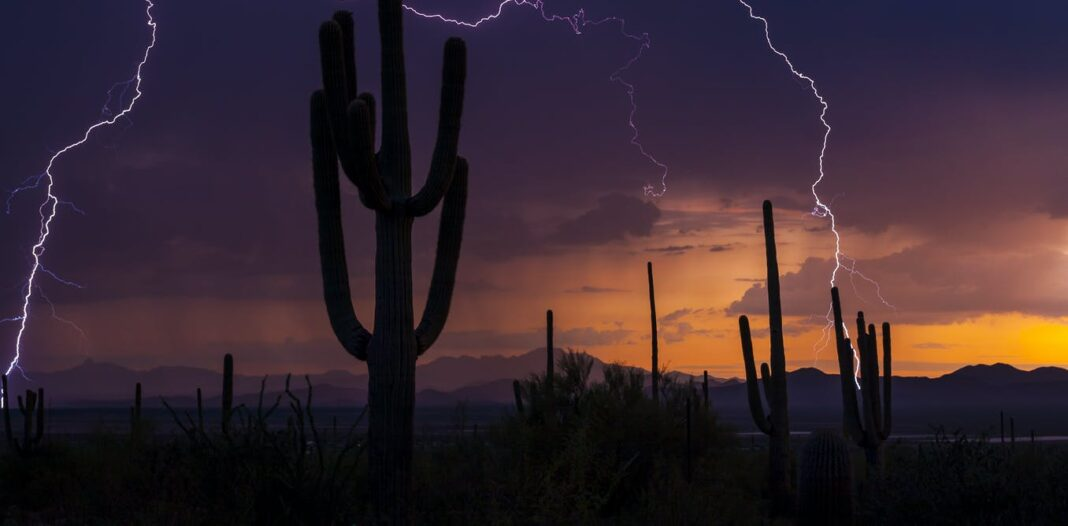 Monsoons bloom deserts in the US southwest, but climate change is making these summer rains more extreme and uncertain